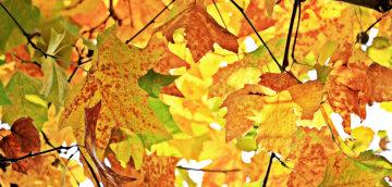 Fall Break: We're closed 10/19-10/21